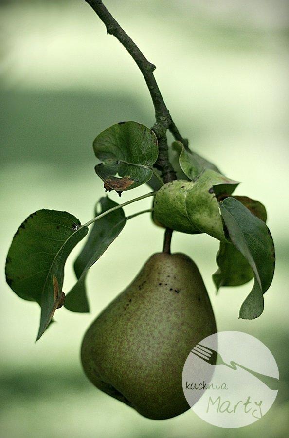 Gruszki w syropie waniliowym - Gruszka na drzewie