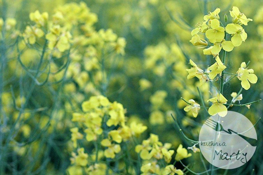 2996.900 - Poznaj sekret dobrego smaku z nową Ramą – Inna. Roślinna!
