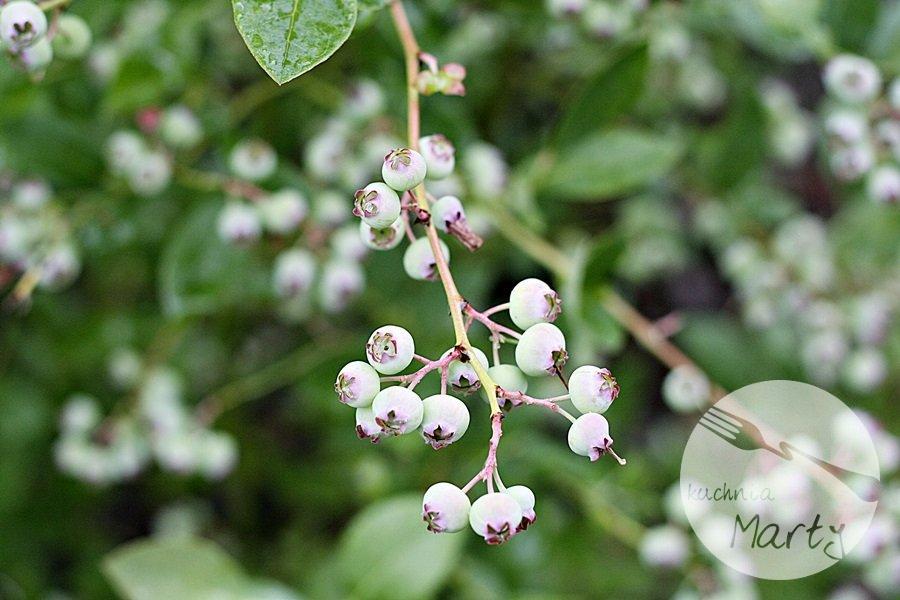 Jagody i borówki – wielka moc w małych owocach