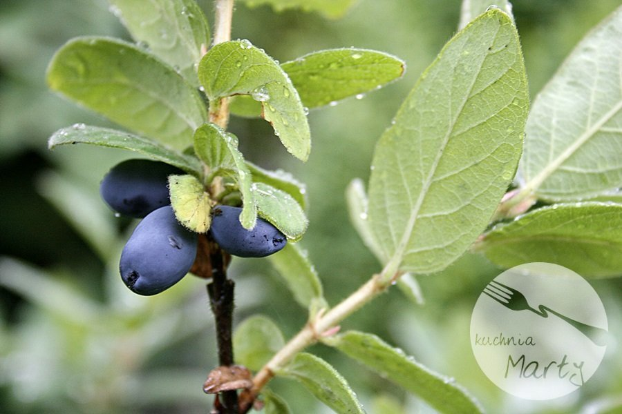 5547.900 - Jagody i borówki – wielka moc w małych owocach