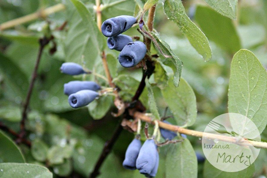 5564.900 - Jagody i borówki – wielka moc w małych owocach